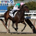 Tampa Bay Derby and San Felipe, Saturday March 12th
